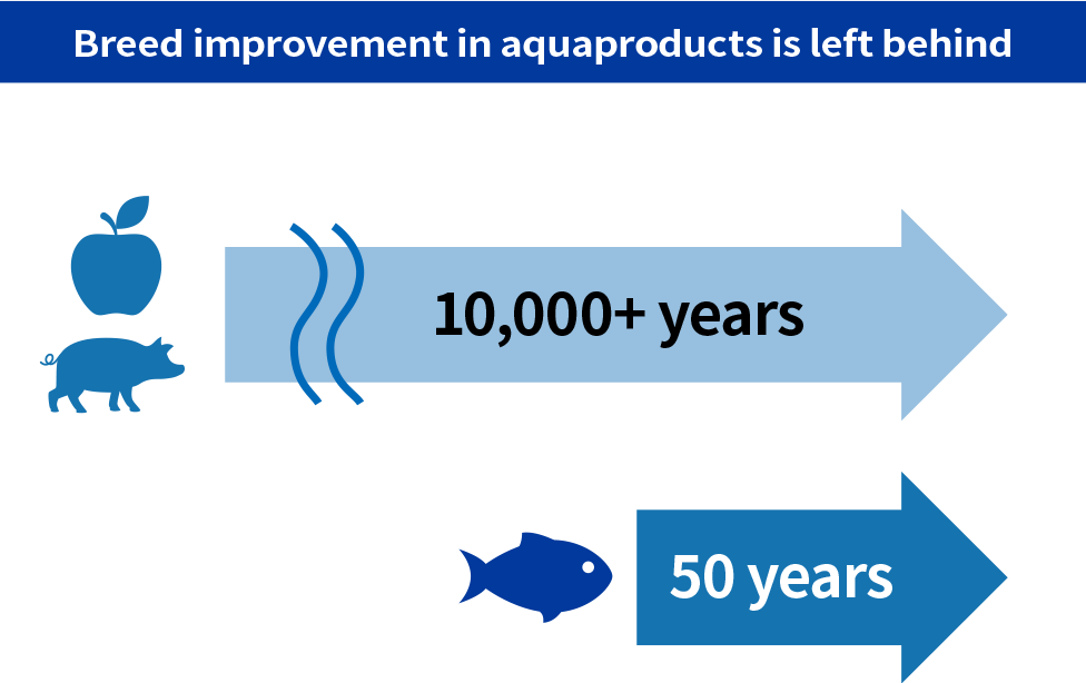 Breed improvement of aquaproducts are left behind