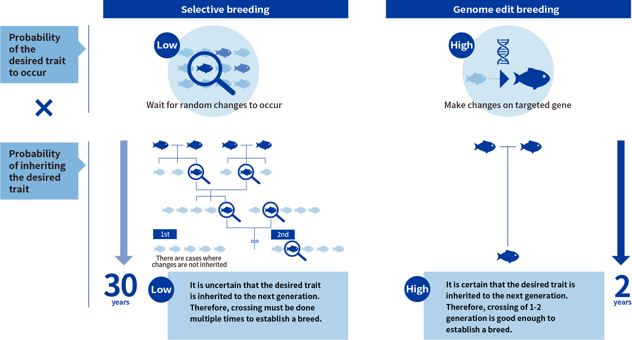 Selective breeding & Genome edit breeding