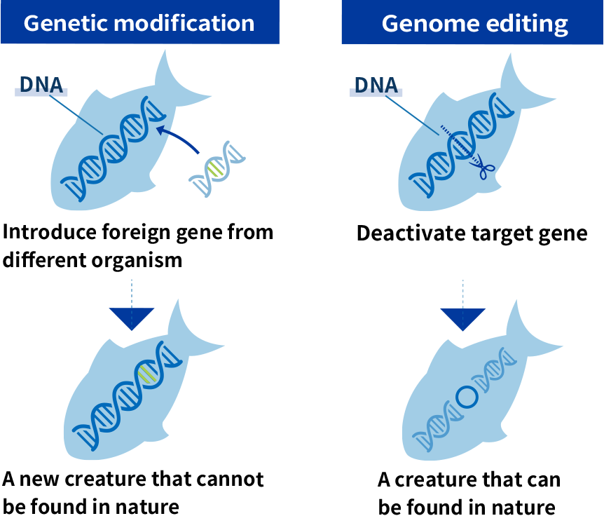Genetic modification & Genome editing