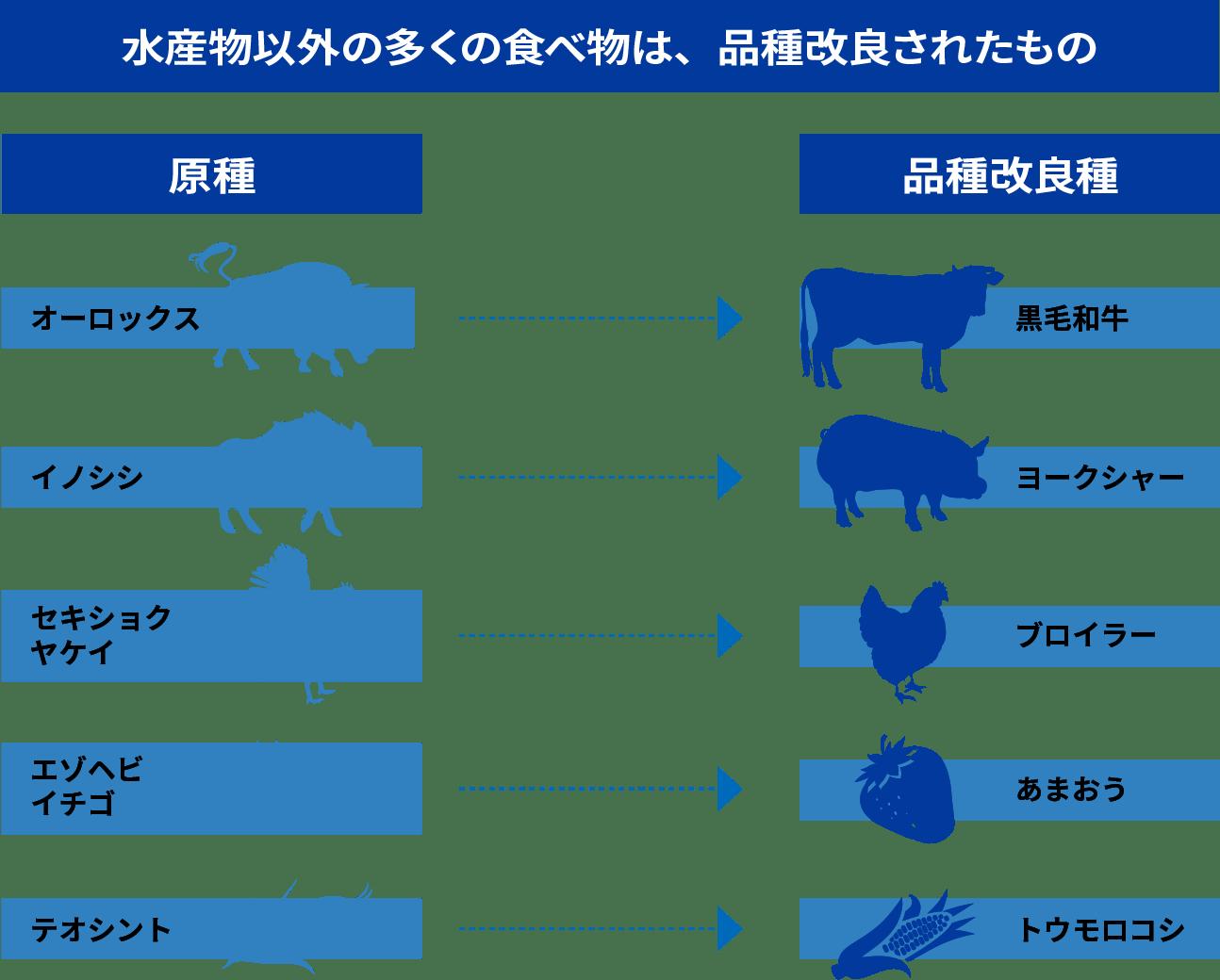 水産物以外の多くの食べ物は、品種改良されたもの