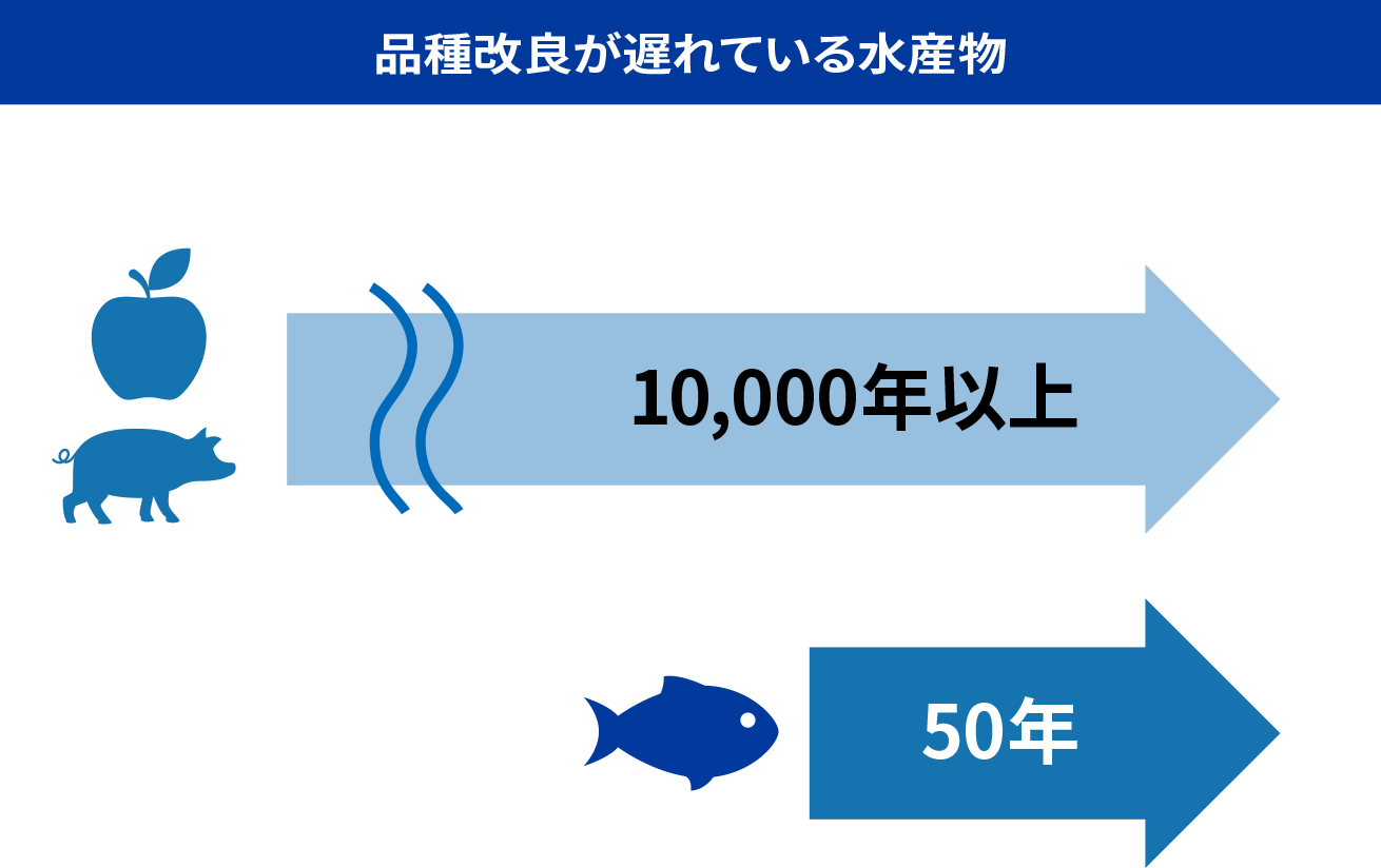 品種改良が遅れている水産物